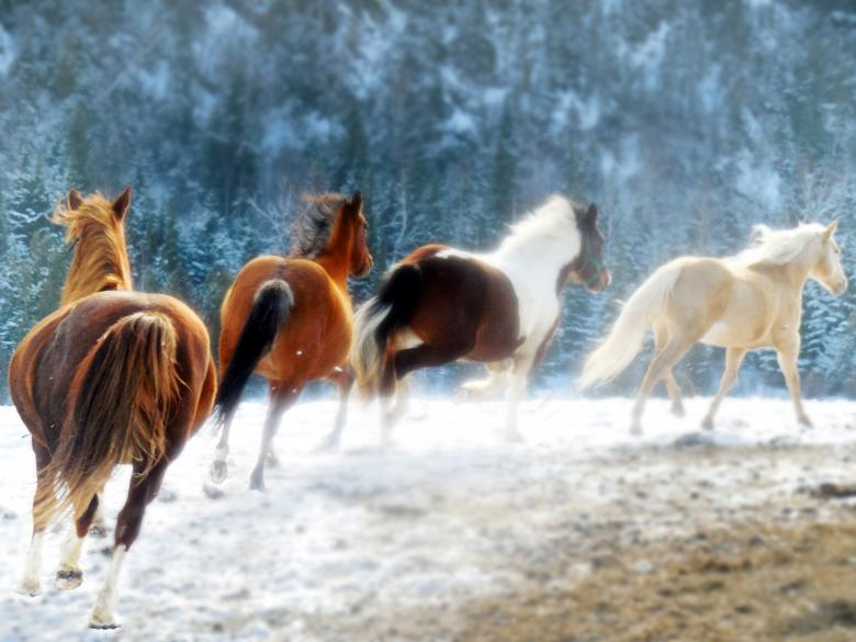 Free Stock Photo of Running Horses Created by beatrice foord