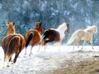 Download Running Horses Free Photo