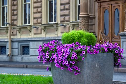 along street in spb - Free Stock Photo