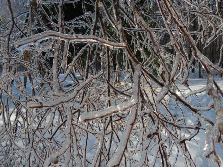 Ice Covered Tree Branch - Free Stock Photo