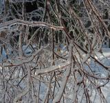 Free Photo - Ice Covered Tree Branch