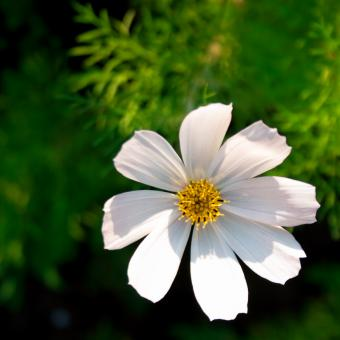 White flower - Free Stock Photo