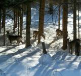 Free Photo - Deer Friends
