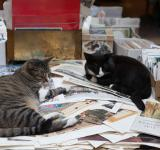 Free Photo - Cats and Books