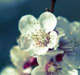 Free Photo - Spring flower
