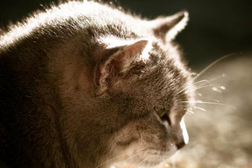 Cat in the sun - Free Stock Photo