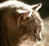 Free Photo - Cat in the sun