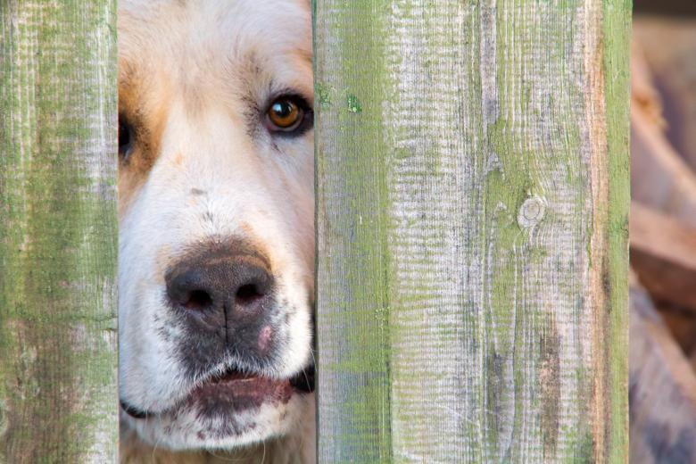 Dog looks through fence - Free Dog Stock Photos