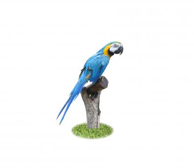 Beautiful Pet Parrot - Free Stock Photo