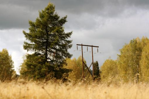 electricity post in autumn forest - Free Stock Photo