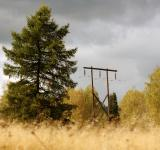 Free Photo - electricity post in autumn forest