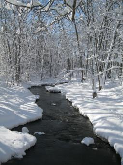 Snowy Stream - Free Stock Photo