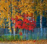 Free Photo - Colorful autumn leaves