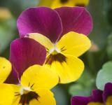 Free Photo - Yellow and purple flowers