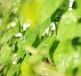 Free Photo - Green leaves
