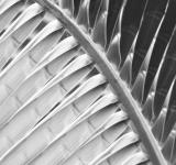 Free Photo - Abstract Palm Leaf Black and White