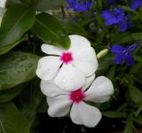 Free Photo - Pink and white flower