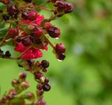 Free Photo - Berries & Flowers