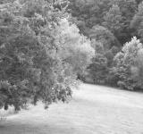 Free Photo - Seat Under Tree Black & White