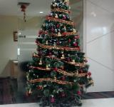 Free Photo - Christmas Tree