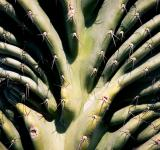 Free Photo - Cactus Plant