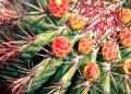 Free Photo - Multicolored cactus with several spikes
