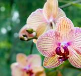 Free Photo - Beautiful Orchids