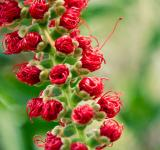 Free Photo - Little red flowers
