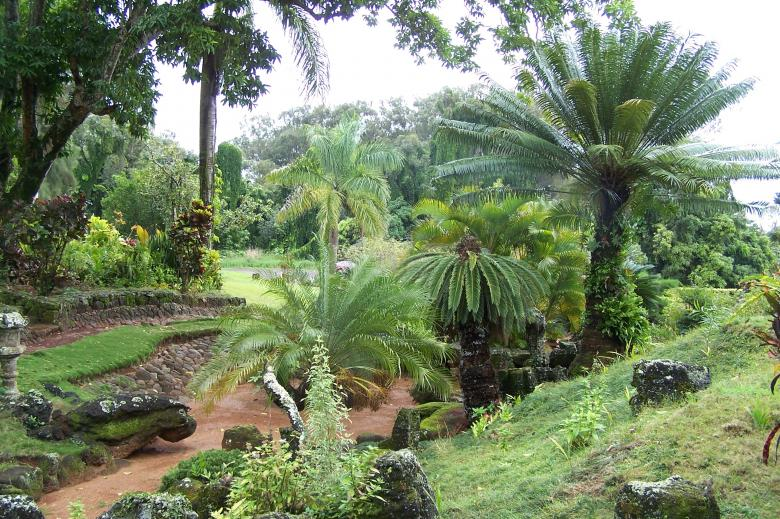 Free Stock Photo of Hawaiian Garden Created by delicopsch56
