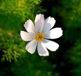 Free Photo - White Flower