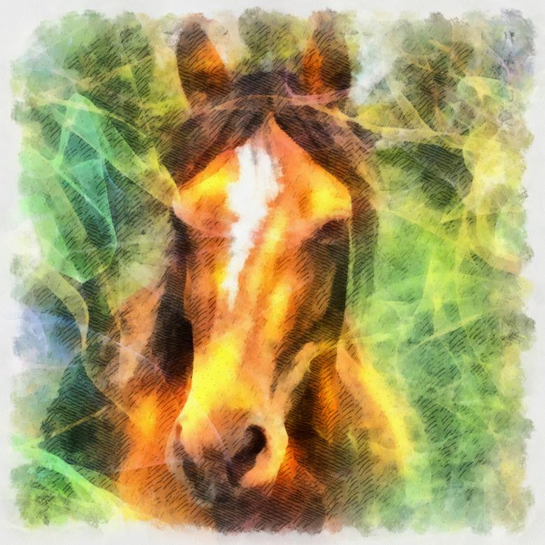 Free Stock Photo of Horse Illustration Created by Prawny