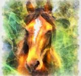 Free Photo - Horse Illustration