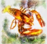 Free Photo - Lobster Illustration
