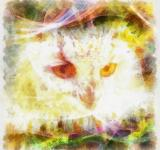 Free Photo - Owl Illustration