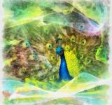 Free Photo - Peafowl Illustration