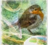 Free Photo - Robin Illustration