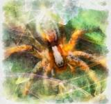 Free Photo - Spider Illustration