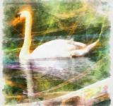Free Photo - Swan Illustration