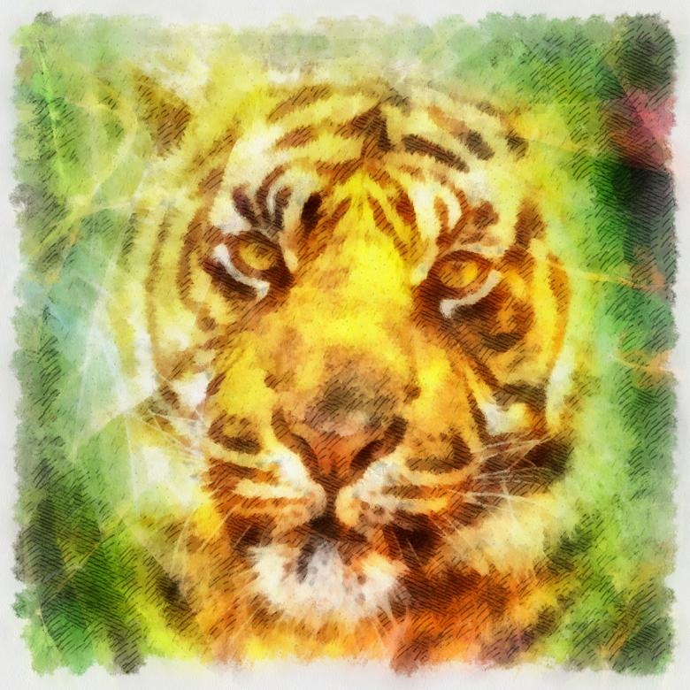 Free Stock Photo of Tiger Illustration Created by Prawny