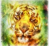Free Photo - Tiger Illustration