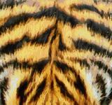 Free Photo - Tiger Fur Painting