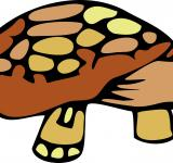 Free Photo - Tortoise Clipart