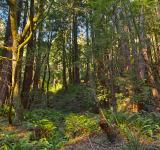 Free Photo - Muir Woods Scenery - HDR