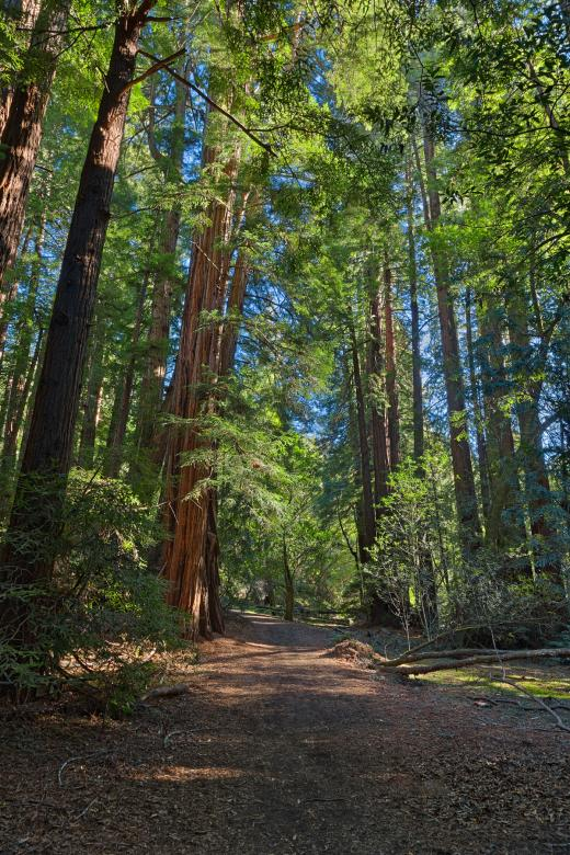 Free Stock Photo of Muir Woods Trail - HDR Created by Nicolas Raymond