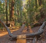 Free Photo - Muir Woods Trail - HDR