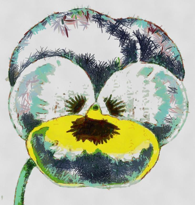 Free Stock Photo of Pansy Created by Prawny