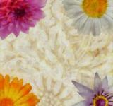 Free Photo - Floral Collage Background