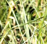 Free Photo - Green Grass Background