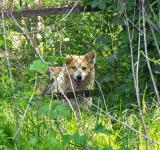 Free Photo - Doggy behind wire fence