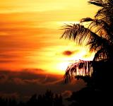 Free Photo - Tropical Palm Tree Sunset